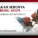 Sabung Ayam S128 Asia